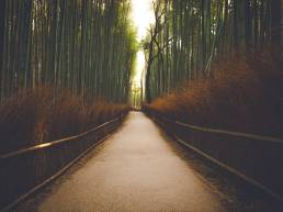 Kyoto_bamboo_forest